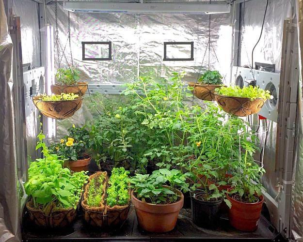 An Indoor Secret Survival Garden Sustainable Organic Q8